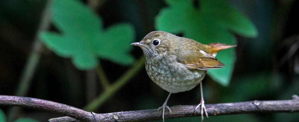 robin-ruf-tail (4)