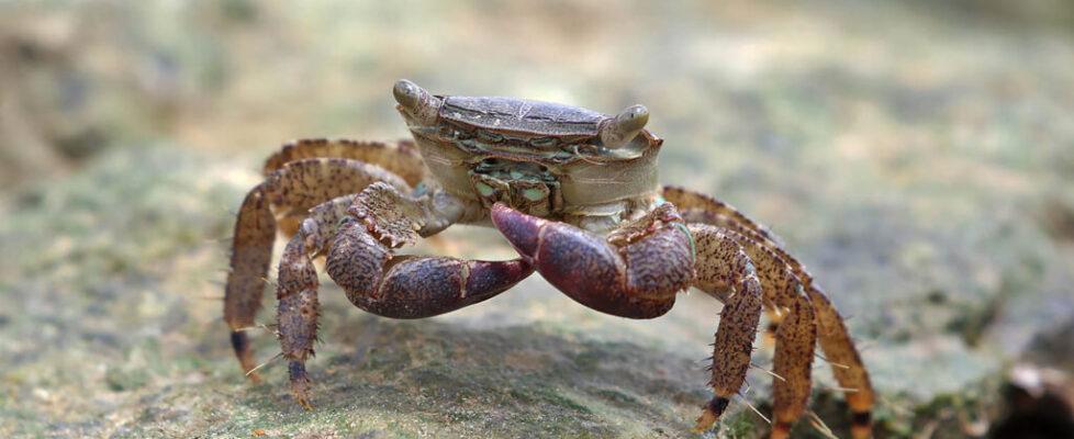 crab4 (7)